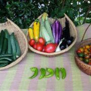 太陽の恵みの野菜たち